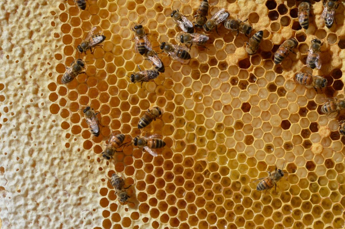 Våra bin